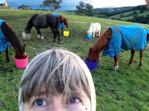 Sue and her horses